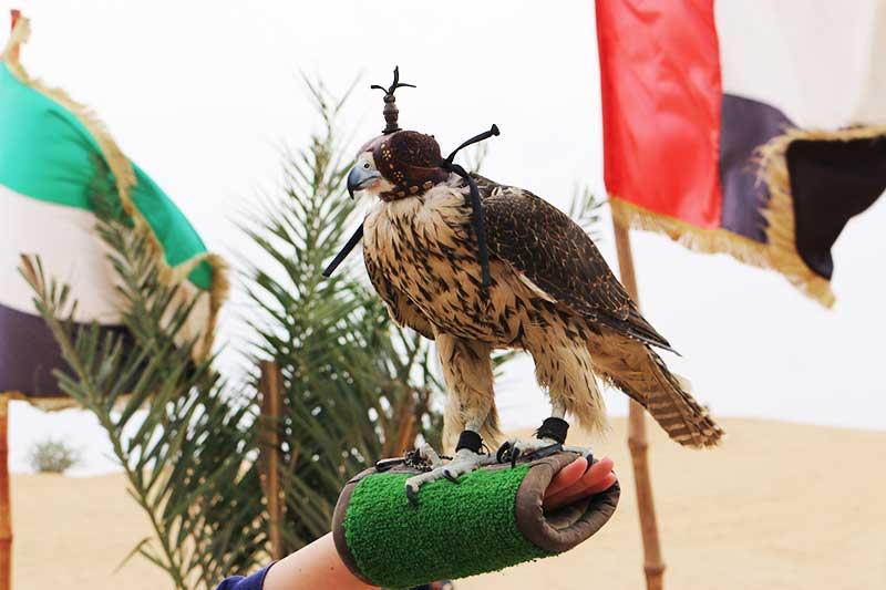 鷲と一緒に撮った写真