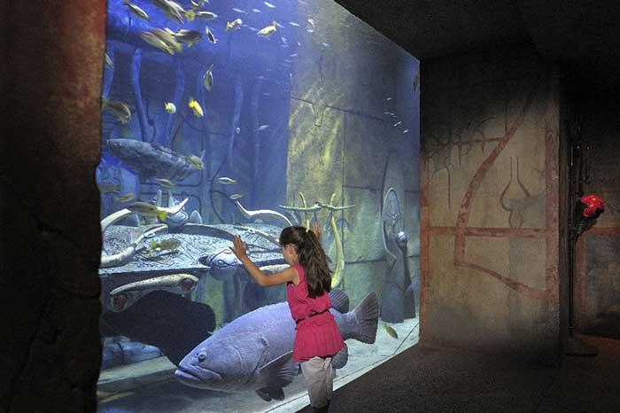アトランティスザパームのロストチェンバー水族館